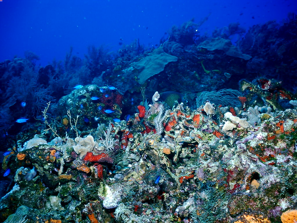 coral reef desktop wallpaper images